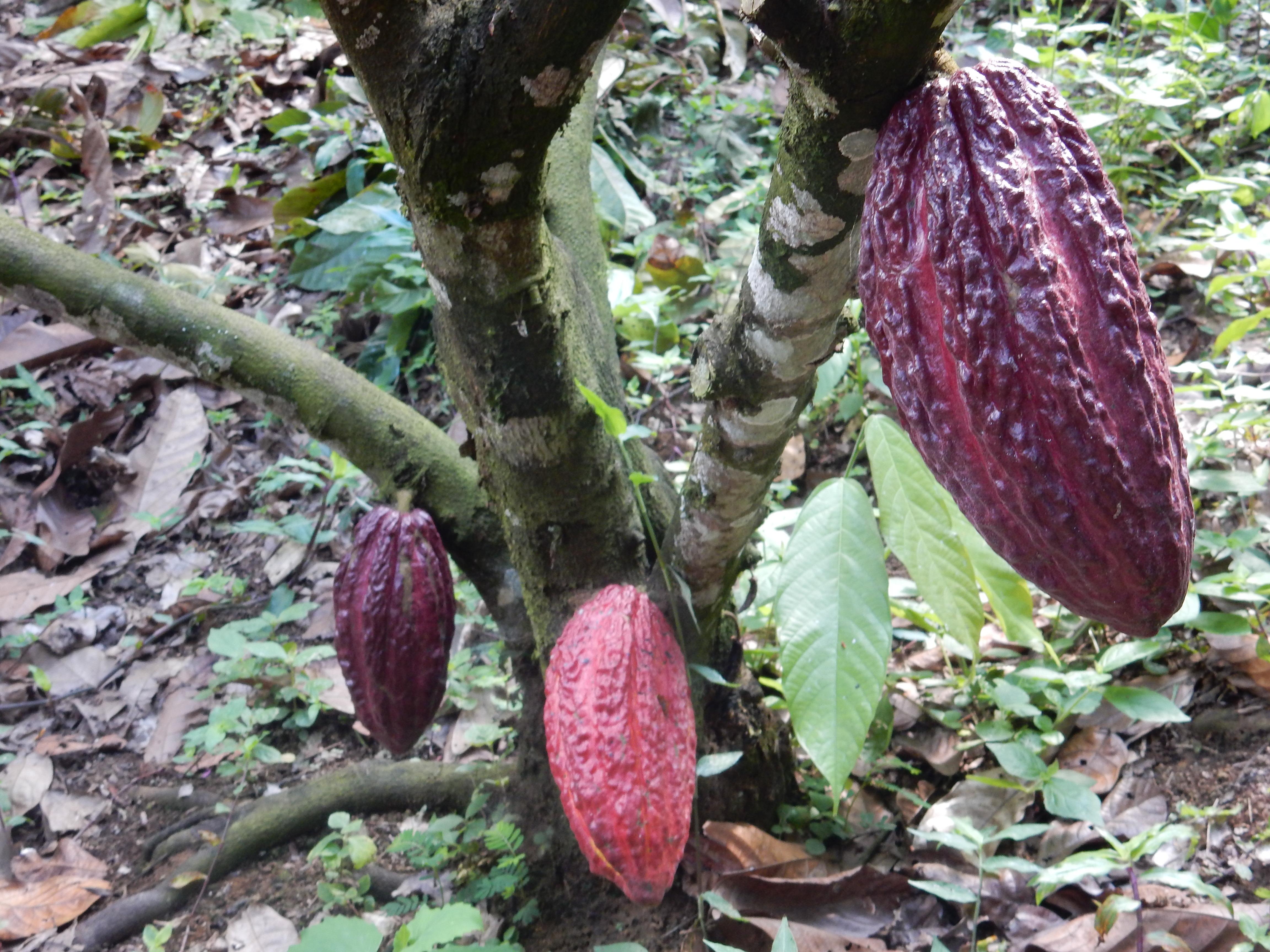 Chocolate-Tour und letzte Tage Medellin